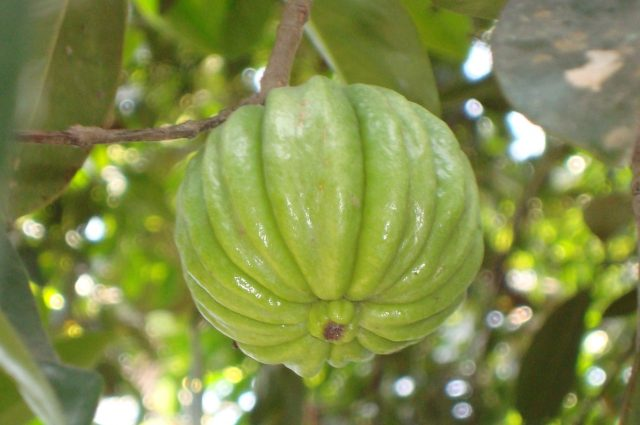 Vital Considerations You Must Make While Buying Garcinia Cambogia Online