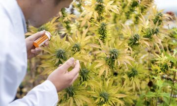 Marijuana Recipes That Will Improve Your Health